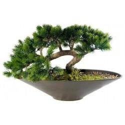 Фън Шуй Бонсай - Ангелски зелен бор